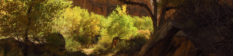 Sandstone canyon with fall colors